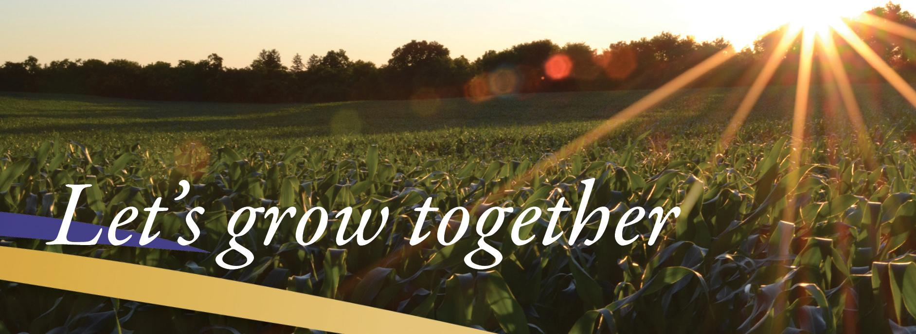 Let's grow together with picture of sun shining on a corn field
